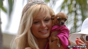 Paris Hilton with Chihuahua dog
