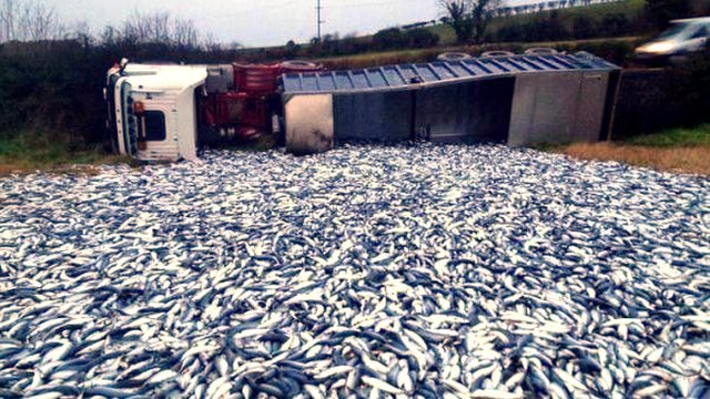 Overturned lorry and mackerel