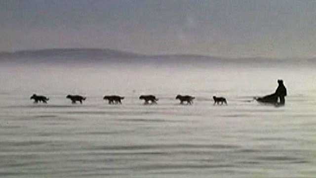 Dog and sleigh racing in Alaska