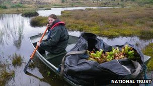 National Trust volunteer Laura Jennings with a boat of pitcher plants