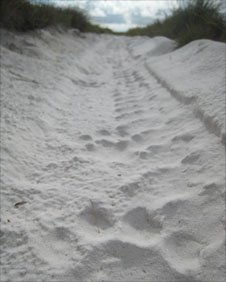 Leopard tracks in the sand