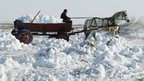 A man carries snow taken from his yard in his horse-driven cart in Posta village near Bucharest, Romania.