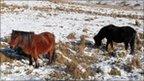 Horses on Dartmoor