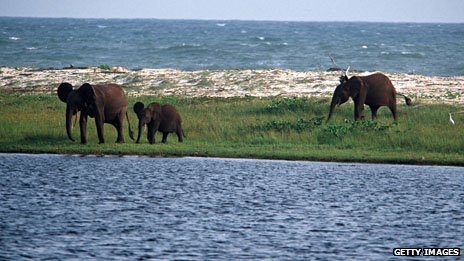 Elephants at the beach 