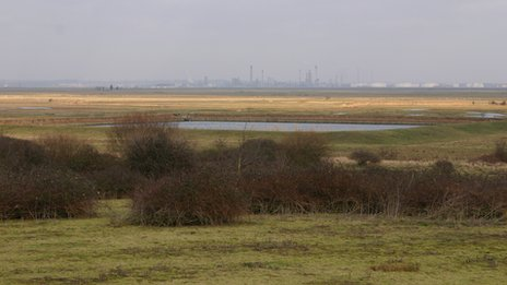 Thames Marshes