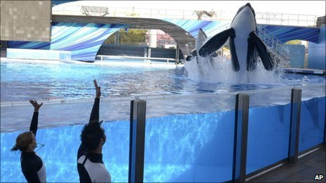 "The five wild-captured orca ""plaintiffs"" are based at SeaWorld Orlando and SeaWorld San Diego"