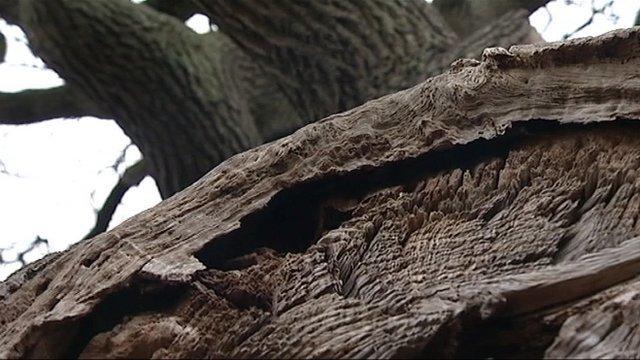 Trees in Torbay