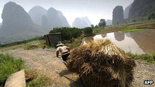 Farmer working in rice paddies in Guangzi province