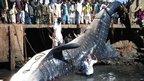 A dead giant whale shark in Karachi, Pakistan on 7 February 2012