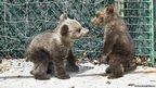 Orphaned bear cubs at rehabilitation centre (c) Karamanlidis/ARCTUROS