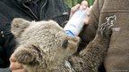 Little John being hand fed by caretakers (c) Karamanlidis/ARCTUROS