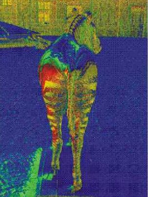 False colour images of zebra revealing the directions of light polarisation as it is reflected (c)