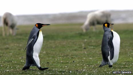Penguins on Falkland Islands