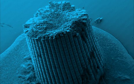 Colourised SEM image of sea urchin spine (Marina Krumova, U Konstanz)