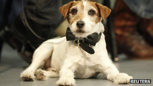 Uggie from The Artist