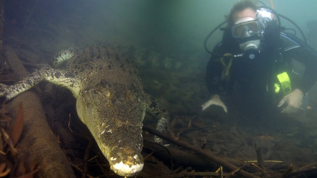Ben Fogle diving with a saltwater crocodile