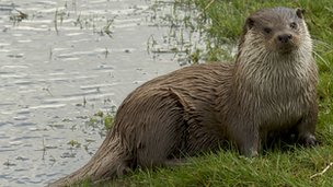 Otter (Nicholas Armitt)