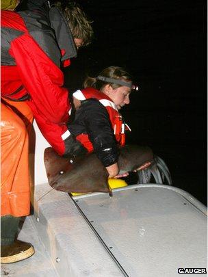 Steward releases a squid