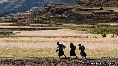 Ethiopia, Agula regionof Tigray. Farming women walk along a bank to reach their allotment. The average size of the allotments