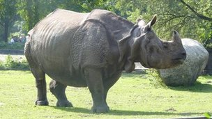 An Indian rhino at Tierpark Zoo 27 October 2010
