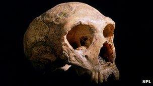 Gibraltar Neanderthal