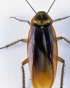 A cockroach
