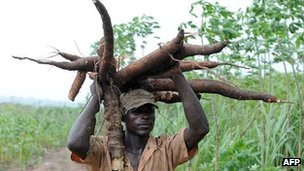 A Nigerian farmer carries a bunch of cassava roots in Osun state