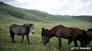 Horses on Bosnia's Krug Mountain