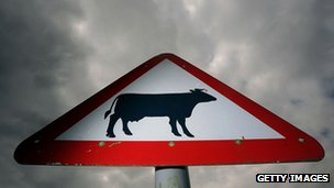 Cow crossing road sign