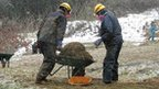 Workers remove contaminated topsoil and vegetation