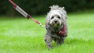 A hearing dog