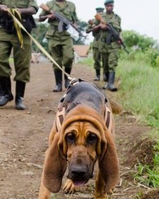 One of the dogs in the canine unit at Virunga National Park