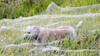 Dog walking under cobwebs that are covering a field