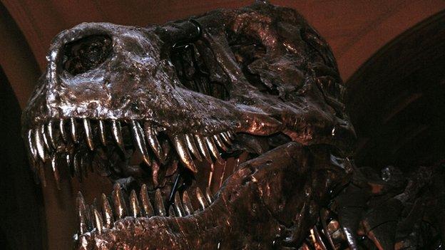 A Tyrannosaur skeleton