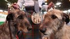 Two Irish Wolfhounds wait for their turn during the Crufts dog show