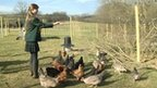 Emily, of Sibford School in Oxfordshire, feeds the chickens that she keeps for her business of selling eggs to locals