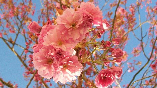 Blossom (c) Abi