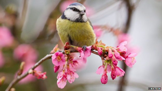 Bird sitting on blossom