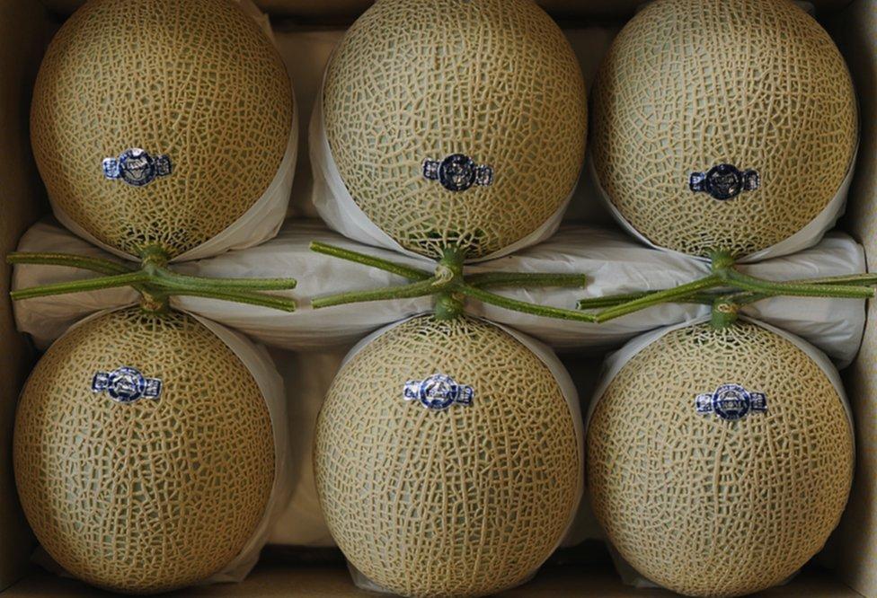 """เชื่อหรือไม่! """"ที่ญี่ปุ่นผลไม้มีค่าดั่งทองคำ """"เมลอน""""ลูกละ""""เกือบ 7,000"""" ทำไมเขาจึงขายได้?"""