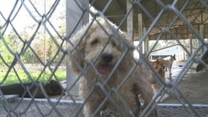At least a quarter of the dogs at the shelter are stolen domestic pets.