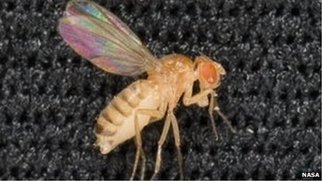 Sleeping fruit fly