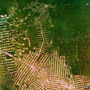 Satellite photo of logging patterns in the Amazon