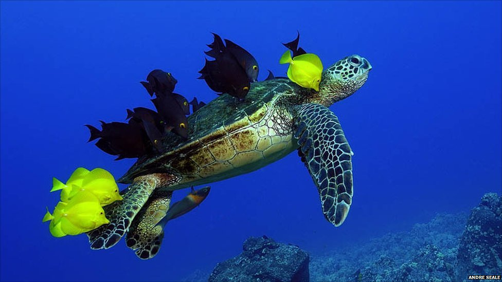 Pictures amazing wildlife photos to go on display cbbc for What fish eat algae