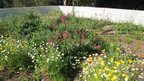 Roof garden in full bloom (c) Clare Dinham