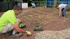 Planting a roof garden (c) Clare Dinham