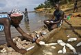 Local residents in the village of Mombanzele, peal and soak Cassava root on the shores of the Oubangui River.