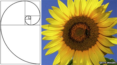 A Fibonacci spiral and a sunflower
