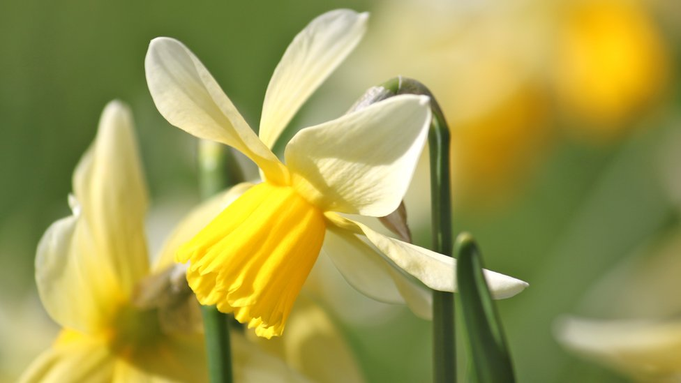 Bbc News In Pictures Spring Sunshine