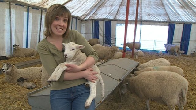 Sally Pepper with a lamb