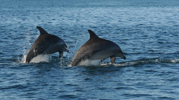 Male dolphins in Shark Bay, Australia